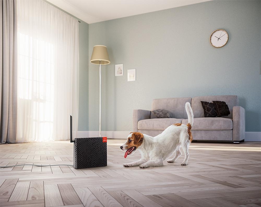 роутер и собака